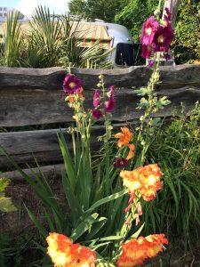 belrepayre flower power pyrenees occitanie france summer suite